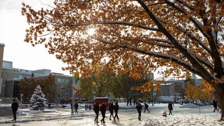 Students walk across wet sidewalks. Snow is on the ground and the sun is shining through the yellow leaves of a large tree.